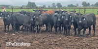 50 Brangus Rep. Heifers... N. Central TX