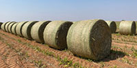 4' Round Bales Available... TX S. Plains