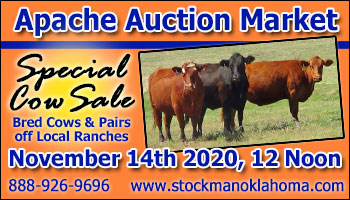 SS-Apache Auction Market Special Cow Sale-11-14-2020