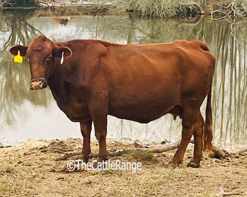 Cattle Range Listing Image 7