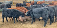 39 Angus, BWF, Red Angus, & RWF Rep. Heifers... N. Central KS (1)