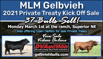 SS-MLM Gelbvieh 2021 Private Treaty Kick Off Sale-03-01-2021