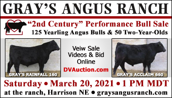 "SS-Gray's Angus Ranch ""2nd Century"" Performance Bull Sale-03-20-2021"