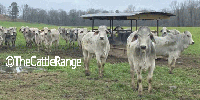 48 Brahman Rep. Heifers... W. Central LA
