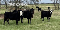 80 Angus & BWF Cows... Southwest MO