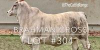 1 Brahman Cross Rep. Heifer... Central TX (2) (2)