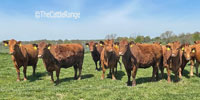 40 Hereford, Red Angus, & RWF Cows... Southwest MO