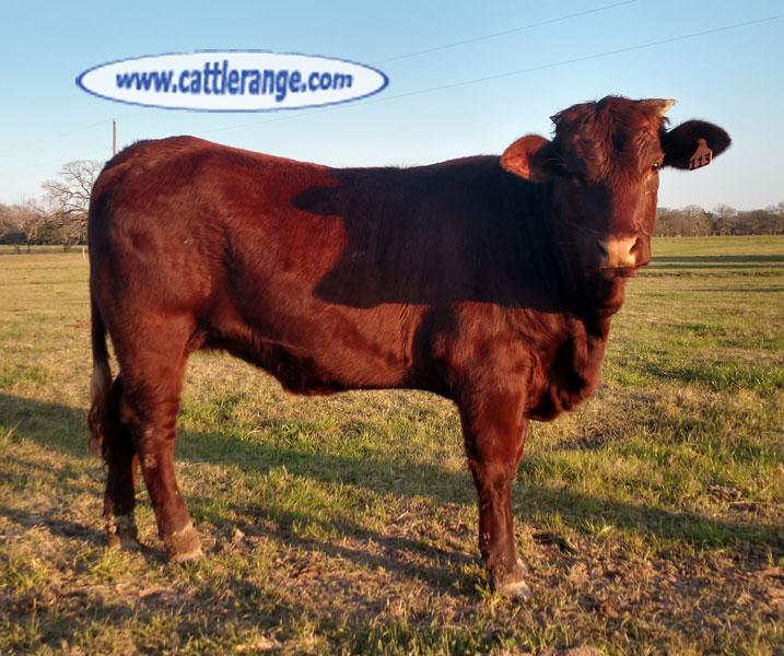Cattle Range Listing Image 4