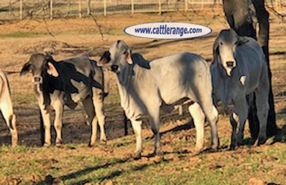 Cattle Range Listing Image 3