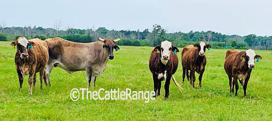 Cattle Range Listing Image