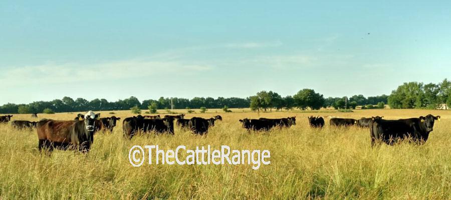 Cattle Range Listing Image 6