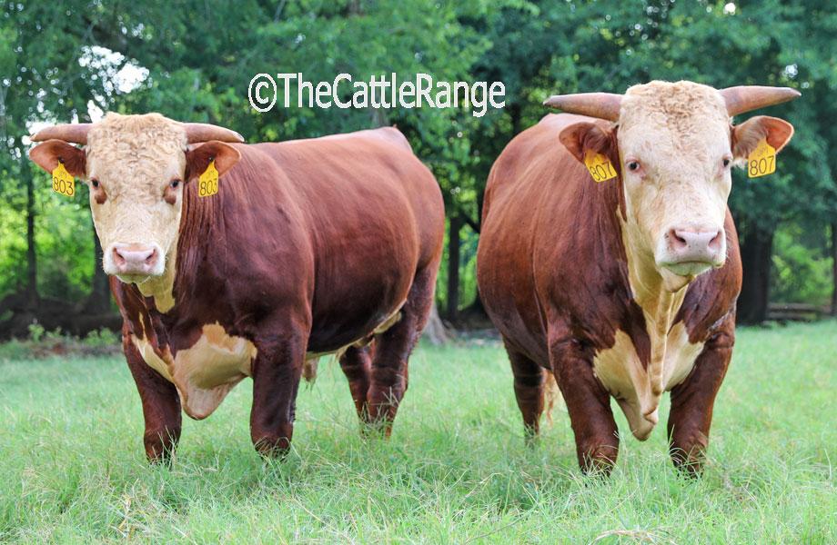 Cattle Range Listing Image 2