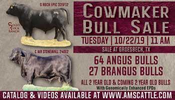 Cowmaker Angus & Brangus Bull Sale
