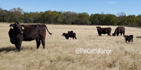 40 Angus Pairs... E. Central KS