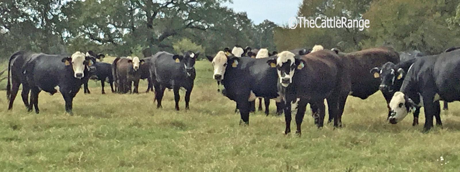 Cattle Range Listing Image 5