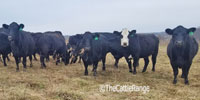 30 Angus & Angus Cross Cows.. Central MO